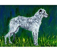 Irish Wolfhound Dog Photographic Print