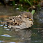 Having a bath by Peter Wiggerman