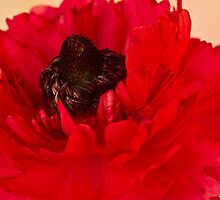Vibrant Petals by Sandra Foster