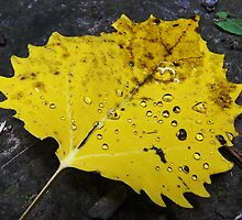 Freshly Fallen Leaf by MSRowe Art and Design