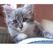 Hamish the Kitten Photographic Print