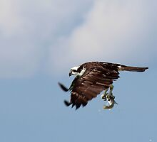 Seafood Catch by Bob Hardy