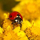 ladybug and wild flower by davvi