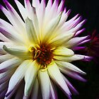 The Star of the Flower Show by PictureNZ
