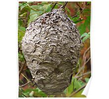 Paper Wasp Hive Poster