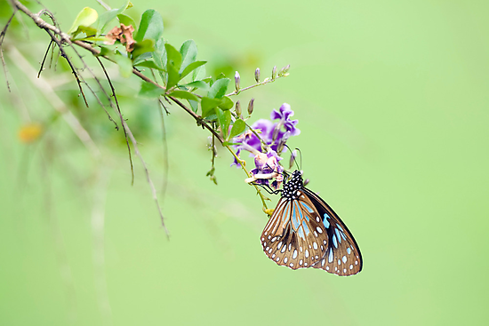Butterfly Blue by Jenny Dean
