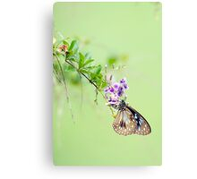 Butterfly Blue 2 Canvas Print