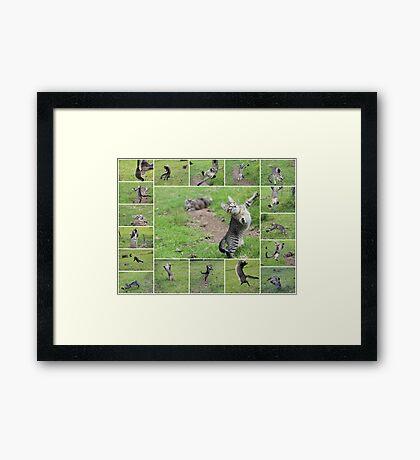 Beaker Boy Framed Print