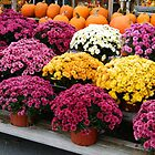 AUTUMN MUMS   ^ by ctheworld