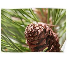 Space or Pine Cone? Poster
