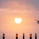 Sunset Pelican by Jenny Dean