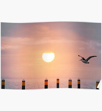 Sunset Pelican Poster