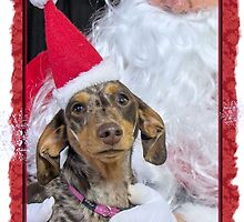 A very doxie Christmas 3 by Sarah Guiton
