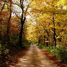 Colorful Back Roads by Carrie Bonham