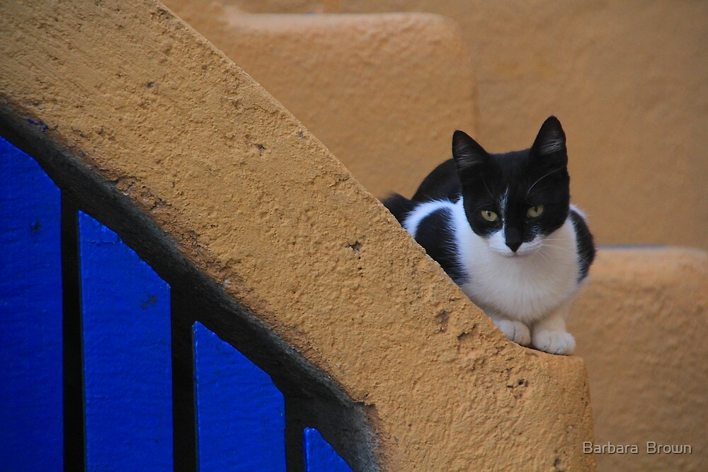 Santorini Kitty by Barbara  Brown