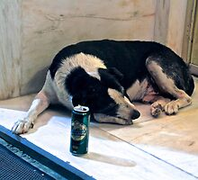 A Dog and It's Beer by Barbara  Brown