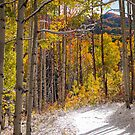 Early Winter Kebler Pass by Luann wilslef