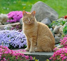 Ginger Garden Cat by Katho Menden