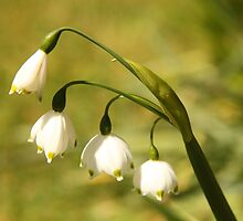 White Bells by Wendy Sinclair
