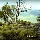 Grazing in the High Country - Mt Buffalo Australia by bekyimage