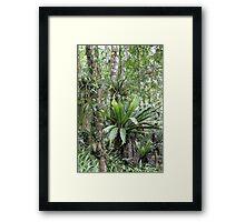 Australian Rainforest Framed Print