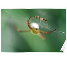 Golden orb spiders with prey Poster