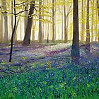 Bluebell Wood by Colin Bedson