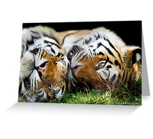 ...a Tiger nap... [FEATURED] Greeting Card