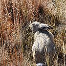 Camouflage by Kay Kempton Raade