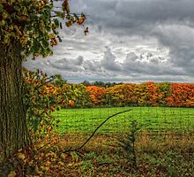 The Fence... by 242Digital