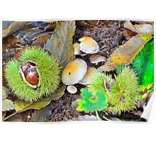 Chestnuts in husk with mushrooms Poster