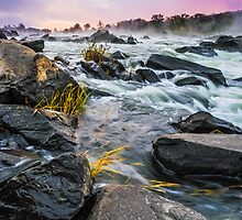 Renewal - Great Falls, VA by Matthew Kocin
