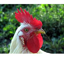 Rooster Portrait Photographic Print