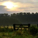 Morning light pastures  by steppeland