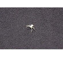 Albino Spider Photographic Print