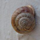 Snail Swirl by M-EK