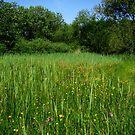 Wet grasslands  by steppeland