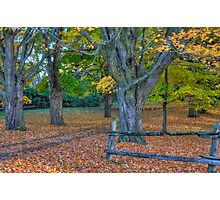 Fallen Leaves II  Photographic Print