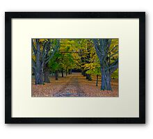 Fallen Leaves III Framed Print