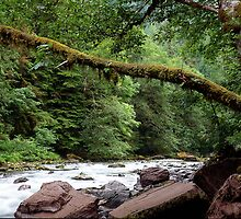 Mossy Maple, Skokomish River, Washington by Vern Treat
