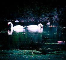 Loving Swans by Elizabeth Thomas