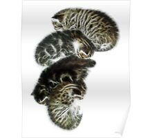 A Pile Of Kittens Poster
