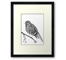 Petty Robin Framed Print