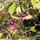 Pink & Blue Flowers by AuntieBarbie