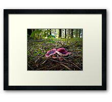 Russulas ~ Wild Mushrooms ~ Framed Print
