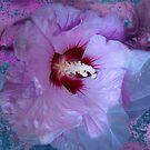 Hibiscus syriacus by Dale Lockridge