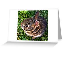Baby Bunny by Cherylorraine Greeting Card