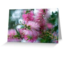 Pink Callistemon ~ Bottlebrush Greeting Card