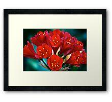 Scarlet Clivea Framed Print
