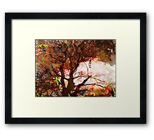 The Woods Framed Print